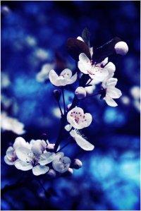 blue_flower_by_creamyjem-d5cnit3