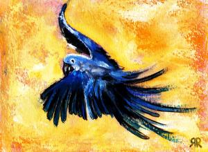 blue-bird-in-flight-rashmi-rao