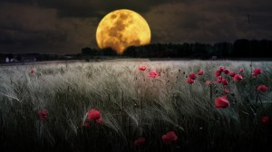 landscapes_dark_night_flowers_moon_fields_bokeh_meadows_1366x768_52710