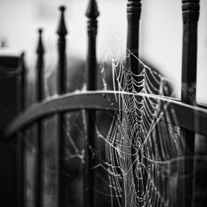 black-and-white-gsayour-macro-photography-spiderweb-Favim.com-355507